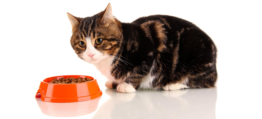 food for older cats