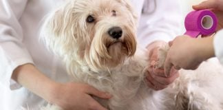 How Much Does Cruciate Ligament Dog Surgery Cost?