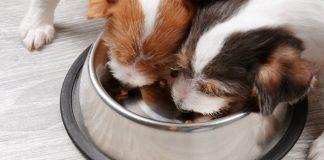how to choose high-quality dog food