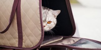 how to get a cat into a carrier