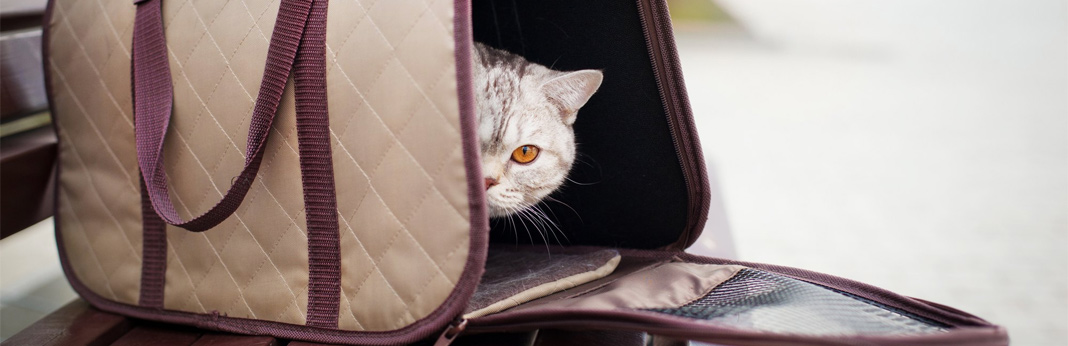 how-to-get-a-cat-into-a-carrier