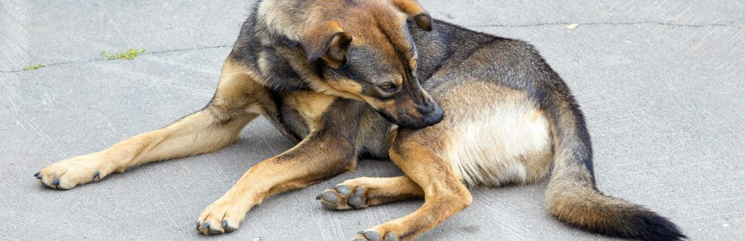 how to relieve dogs itchy skin