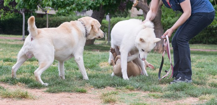 How To Socialize an Aggressive Dog