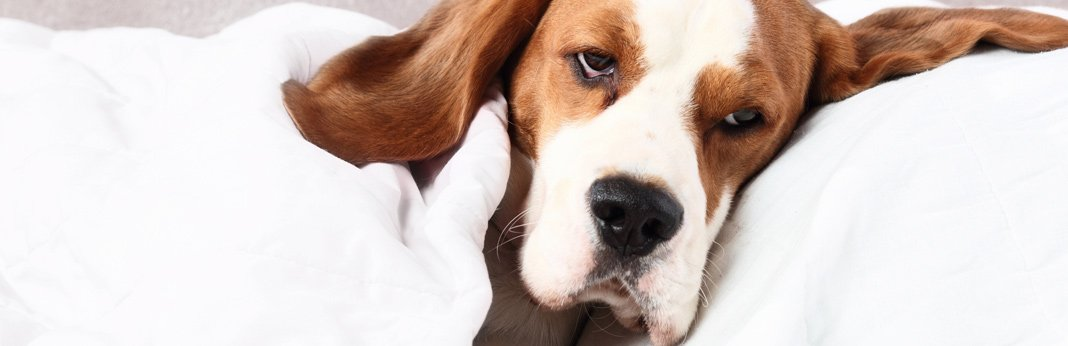 how to treat uti in dogs 3