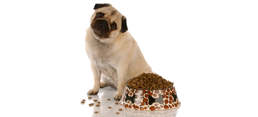 low protein dog foods