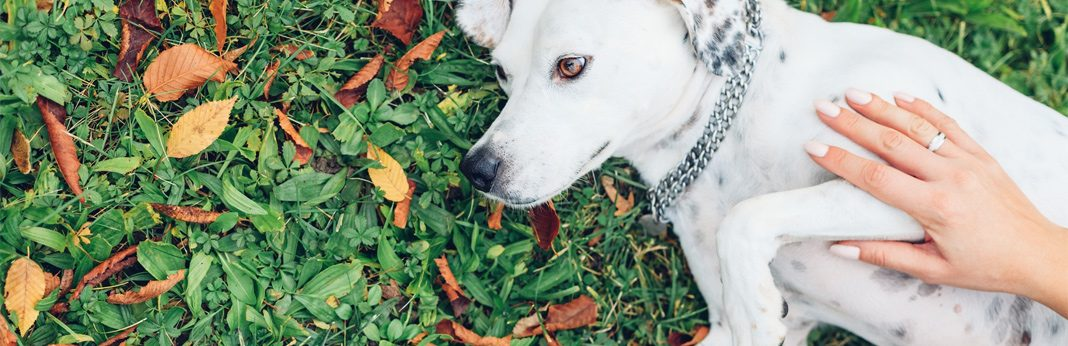 prevent and remove skin tags on dogs