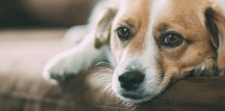 Separation Anxiety in Dogs – Causes and Treatment