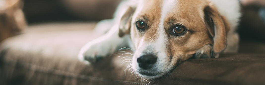 separation-anxiety-in-dogs–causes-and-treatment