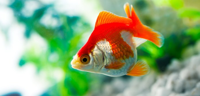 tips for lowering ph in a freshwater aquarium