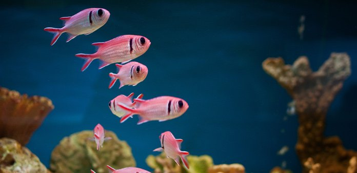 how to lower the ph in your fish tank