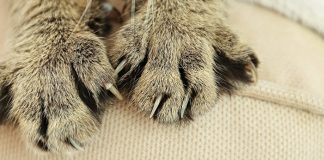 tips to prevent cat from scratching furniture