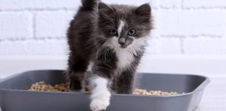 train litter cat