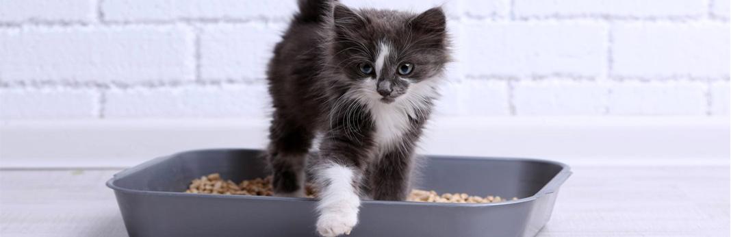 train-litter-cat