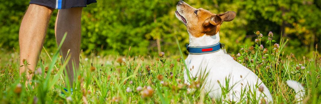 tricks to teach your dog