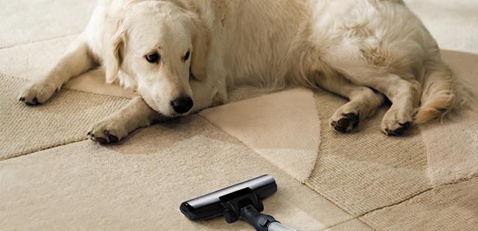 5 natural remedies for fleas on dogs. Black Bedroom Furniture Sets. Home Design Ideas