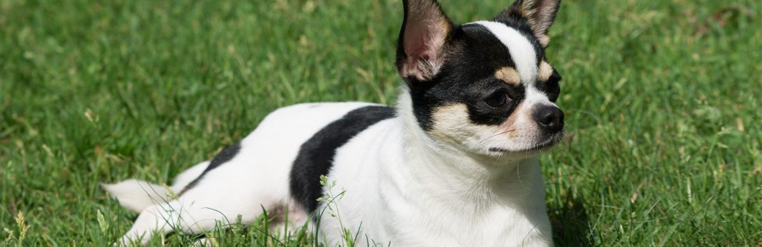 vitamin b12 for dogs uses benefits