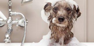 ways to bath your dog