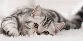 10 great ways to keep your cat entertained