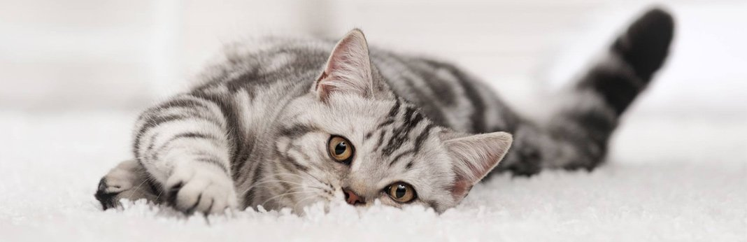 10-great-ways-to-keep-your-cat-entertained
