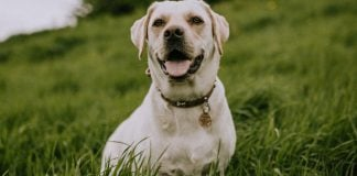 5 tips to help you prevent losing your dog