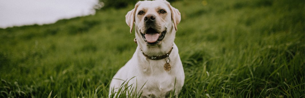 5-tips-to-help-you-prevent-losing-your-dog