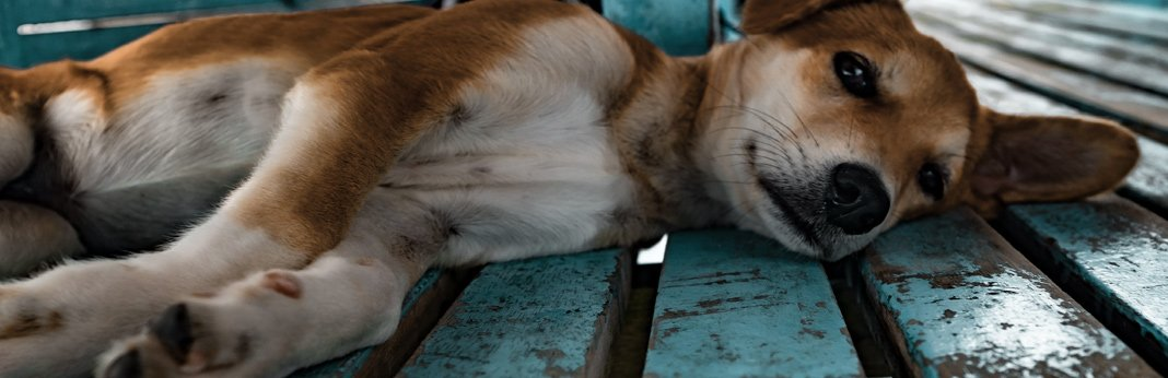 8 signs of joint pain in dogs and how to help