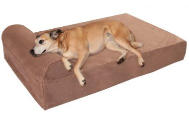 7-Inch Pillow Top Orthopedic Dog Bed for Large and Extra-Large Breed Dogs by Big Barker