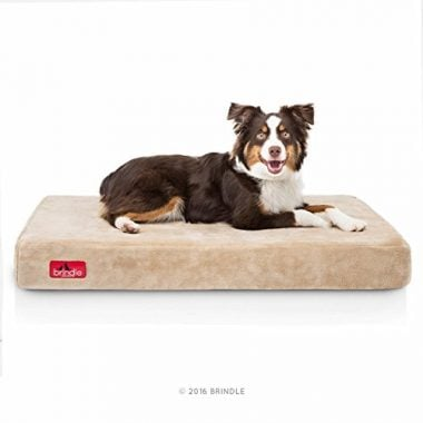 4-Inch Solid Memory Foam Orthopedic Dog Bed by Brindle