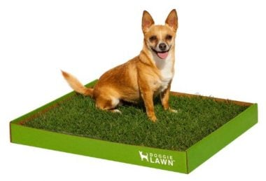 Disposable Dog Potty – Real Grass by DoggieLawn