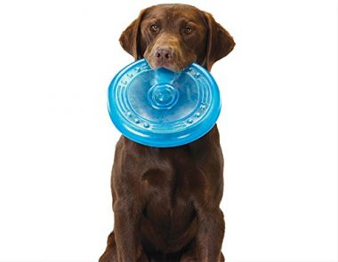 Orka Flyer Rubber Durable Frisbee Chew and Fetch Toy for Dogs by Petstages