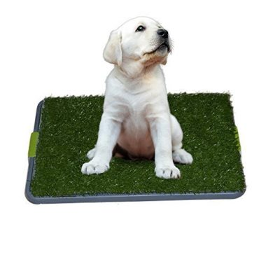Easy Dog Potty Training by Sonnyridge