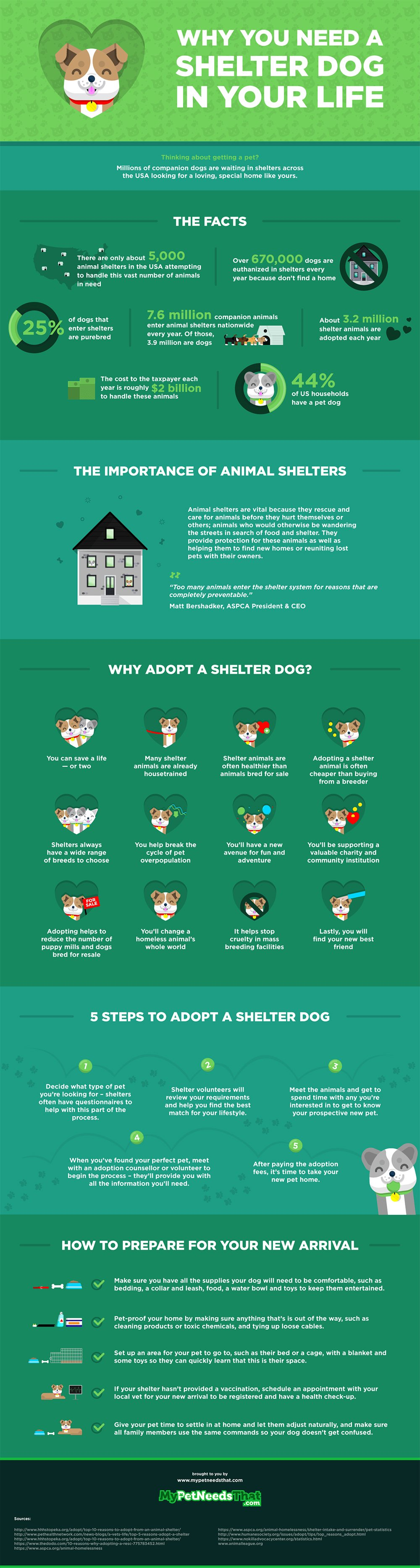 Adopting a Shelter Dog