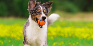 best automatic fetch machines