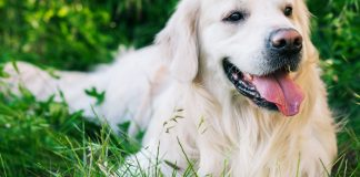 best calcium supplements for dogs