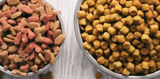 best dehydrated dog food