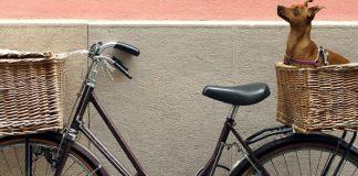 best dog baskets for bikes