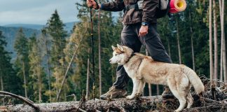best dog breeds for hiking