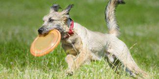 best fresbee for dogs