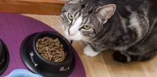 best grain free cat food