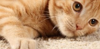 best lasers for cats