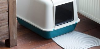 best litter boxes for cats