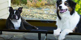 best raised dog beds