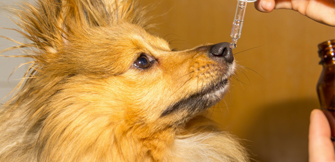 bravecto dog medicine