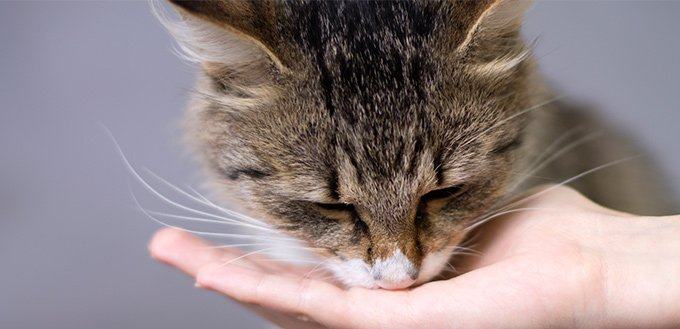 how to stop a cat from biting and scratching