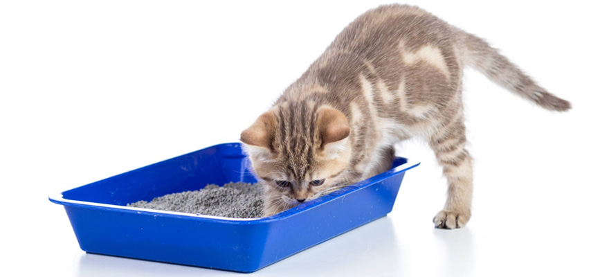 Best Litter Box Solution For Multiple Cats
