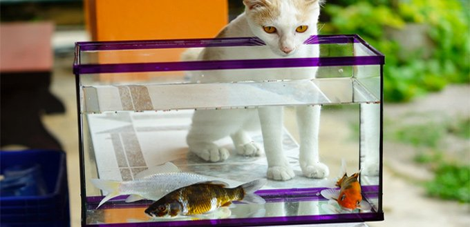 cat with fish tank