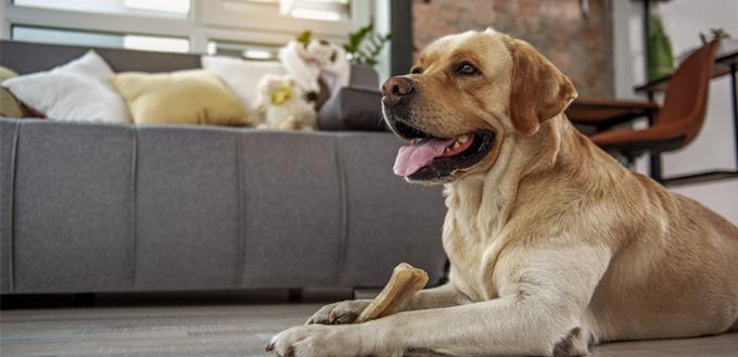 dog eating bone