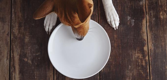 dog eats bread