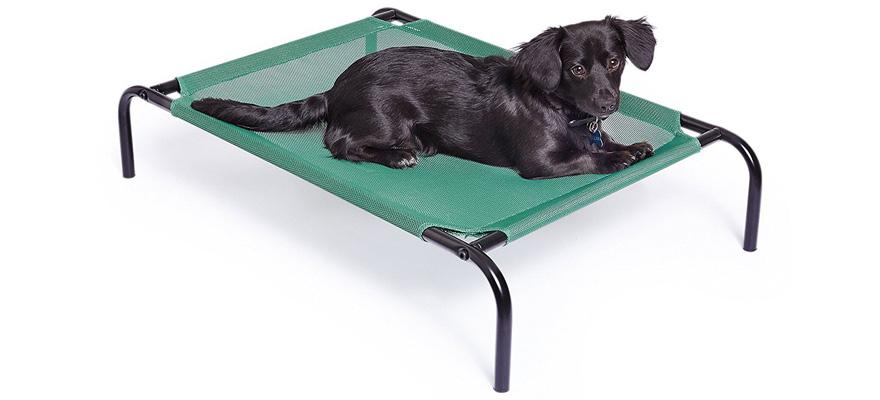 dog on raised bed