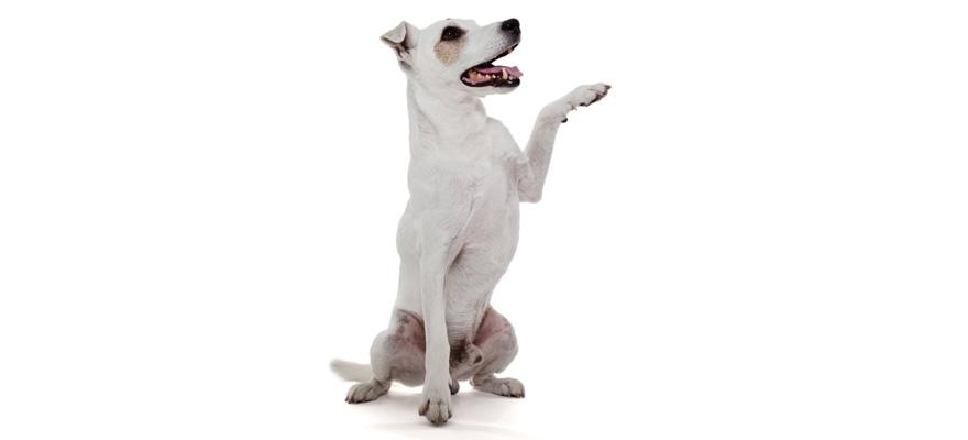dog paw wax